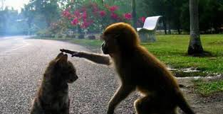 Sociale dieren